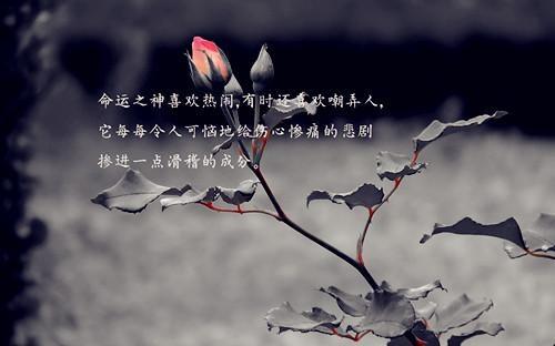 经典语录励志人生感悟 励志乐观的人生哲