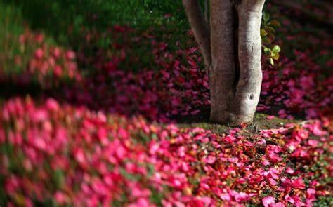 爱情的句子唯美短句 一句话打动人心的爱