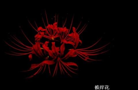 生活感悟经典句子 说不出的压抑和心累