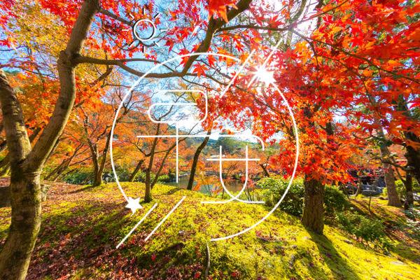 微信早安问候语正能量 早安问候语励志